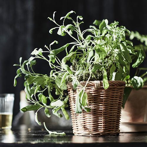 KAKTUSFIKON plant pot