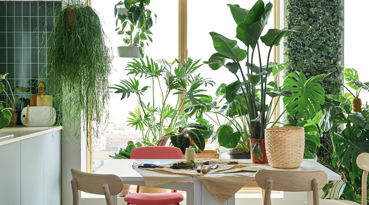 5 ways to have a garden at home with no balcony